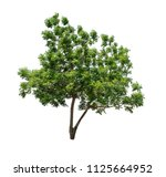 isolated tree on white... | Shutterstock . vector #1125664952