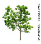 isolated tree on white... | Shutterstock . vector #1125664958