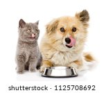 Stock photo little kitten and licking lips hungry puppy with a empty bowl isolated on white background 1125708692
