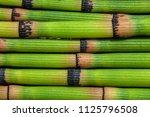 horsetail texture macro... | Shutterstock . vector #1125796508