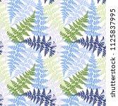 fern frond herbs  tropical... | Shutterstock .eps vector #1125837995