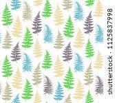 fern frond herbs  tropical... | Shutterstock .eps vector #1125837998