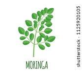 moringa vector logo in flat...   Shutterstock .eps vector #1125920105
