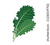 nature organic vegetable kale ... | Shutterstock .eps vector #1126019702