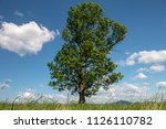 large lonely tree against a... | Shutterstock . vector #1126110782