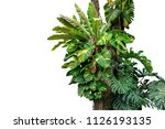rainforest tree trunk with... | Shutterstock . vector #1126193135