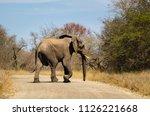 elephants crossing dirt road ... | Shutterstock . vector #1126221668