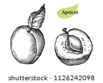 apricot collection. hand drawn... | Shutterstock .eps vector #1126242098