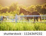 green meadow and grasses with... | Shutterstock . vector #1126369232