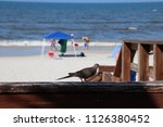 mourning dove bird perched on... | Shutterstock . vector #1126380452
