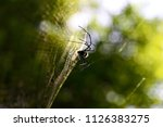 A Spider Web In Nature...