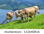 Swiss cows on Alpine meadow - stock photo