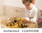 Stock photo the little cute boy sitting near the little ducks and holding one of them in hands 1126542308