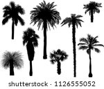 illustration with palm trees... | Shutterstock .eps vector #1126555052