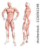 conceptual anatomy healthy...   Shutterstock . vector #1126561148
