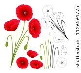 papaver rhoeas  or common poppy ... | Shutterstock .eps vector #1126564775