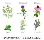 milk thistle and feverfew... | Shutterstock .eps vector #1126566332