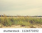 vegetation on the beach and a... | Shutterstock . vector #1126573352