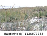 vegetation on the beach and a... | Shutterstock . vector #1126573355