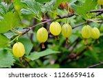 fresh organic green... | Shutterstock . vector #1126659416