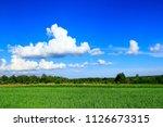 summer landscape with rural...   Shutterstock . vector #1126673315