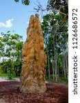 beautiful termite hill around... | Shutterstock . vector #1126686572