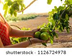 the hands of a woman holding... | Shutterstock . vector #1126724978