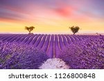 beautiful sunset lavender field ... | Shutterstock . vector #1126800848
