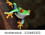 red eye tree frog  agalychnis... | Shutterstock . vector #112681322