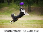 Black And White Dog Catching...