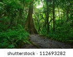 jungle forest. tropical trees... | Shutterstock . vector #112693282