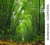 bamboo forest. jungle... | Shutterstock . vector #112693306