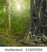 big old tree trunk with roots... | Shutterstock . vector #112693336