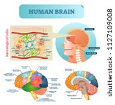 brain vector illustration.... | Shutterstock .eps vector #1127109008