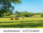 Horses At Green Pastures Of...