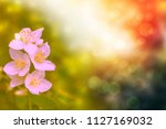 white jasmine. the branch... | Shutterstock . vector #1127169032