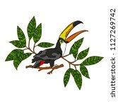 toucan bird. branches with... | Shutterstock .eps vector #1127269742