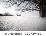 Big Oak Tree  In A Winter Snow...