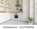 Stock photo plant in white kitchen interior with cabinets and silver cooker hood above countertop real photo 1127343002