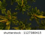 tropical palm trees bottom view ... | Shutterstock . vector #1127380415