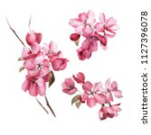 pink flowers  watercolor  can... | Shutterstock . vector #1127396078
