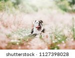Cute Dog On The Background Of...