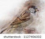 little sparrow watercolor... | Shutterstock . vector #1127406332