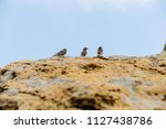 Small photo of sparrows on the rocks, sparrows at sea, ocean and sparrows, birds on the beach