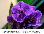 purple flower closeup | Shutterstock . vector #1127440292