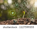 seedlings are growing from... | Shutterstock . vector #1127599355