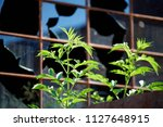 close up view from an old ... | Shutterstock . vector #1127648915