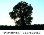 tree under the sunlight at...   Shutterstock . vector #1127693468