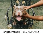 training dogs overcame his... | Shutterstock . vector #1127693915