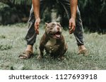 training dogs overcame his... | Shutterstock . vector #1127693918